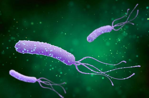 جرثومة-المعدة-البكتيريا-الحلزونية-helicobacter-pylori-bacterium.jpg