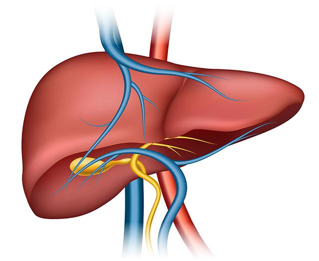 فيروس-الالتهاب-الكبدي-الوبائي-أ.jpg