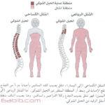 إصابات الحبل الشوكي Spinal Cord Injuries