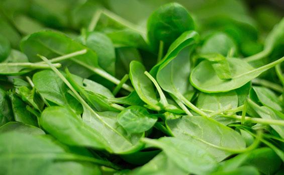 استعمالات وفوائد السبانخ الطبية Spinach