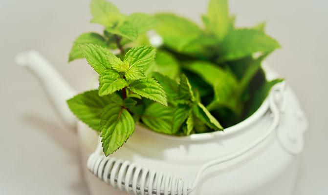 استعمالات وفوائد الشاي الطبية Tea