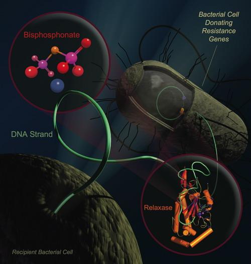 البكتيريا Bacteria