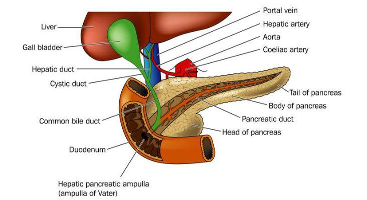 التهاب البنكرياس المزمن Chronic Pancreatitis | لمحة