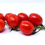 الطماطم | البندورة Tomato