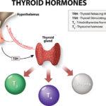 تحليل هرمونات الغدة الدرقية Thyroid Hormones