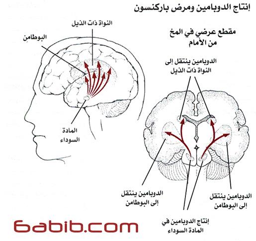 مرض باركنسون Parkinson Disease