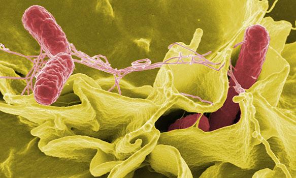 أنواع التسمم الغذائي الناتج عن التلوث بجراثيم