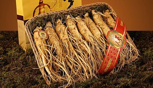 الجنسنغ   الجنسنج Ginseng