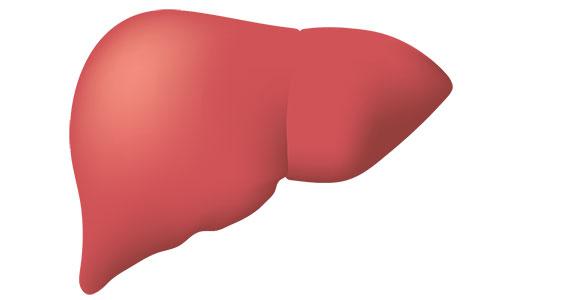 الكبد