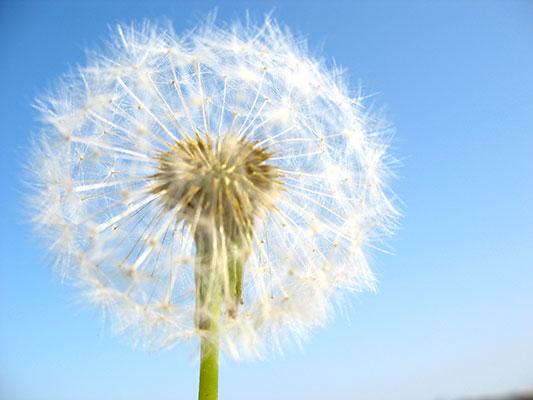 الحساسية Allergy