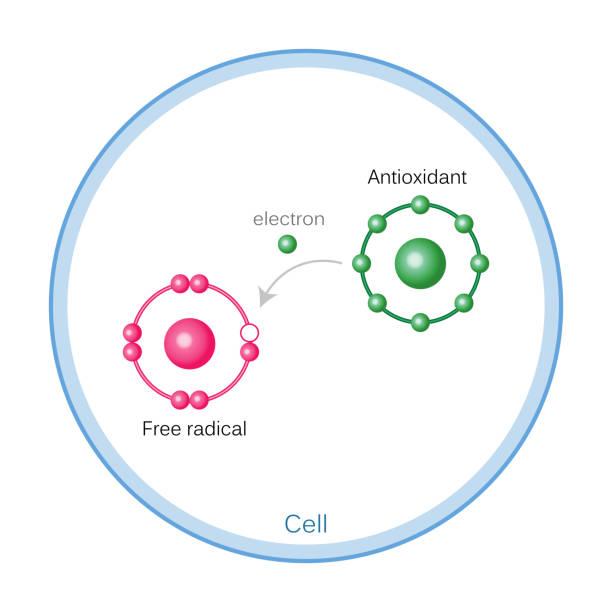 كيفية الوقاية من السرطان   كيف يمكن دعم الجهاز المناعي وتقويته