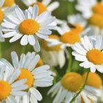 علاج الأمراض بالأعشاب والنباتات الطبية