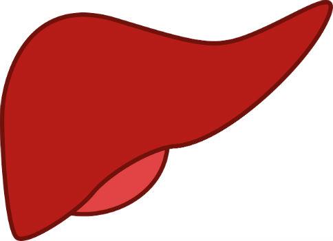 نظام غذائي لتنظيف الكبد للتخلص من متلازمة التعب المزمن
