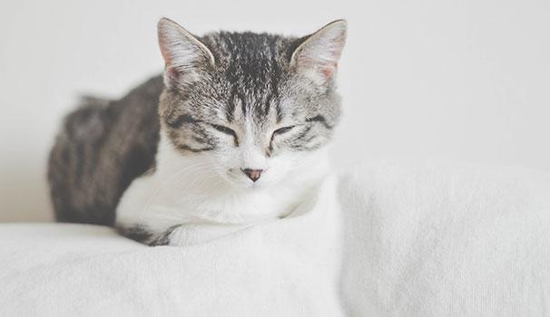 تربية القطط في فترة الحمل في المنزل | داء المقوسات