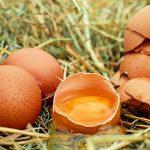 الوقاية من التسمم الغذائي | دراسات
