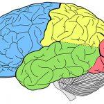 علاج أمراض الأعصاب والمخ بواسطة مضادات الأكسدة
