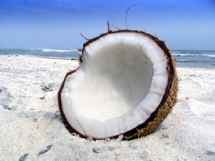 جوز الهند Coconut