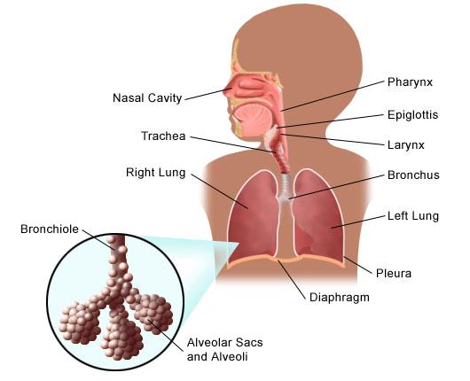 Pneumonia الالتهاب الرئوي عند الاطفال تحت سن الخامسة