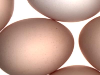 eggs بيض، البيض