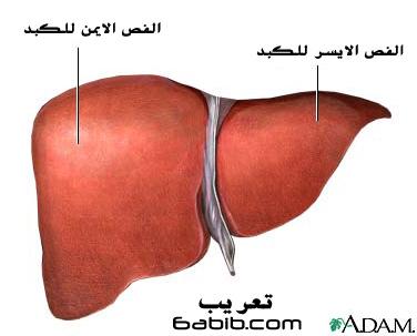 فصوص الكبد