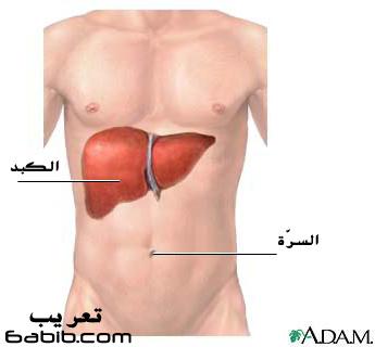 موقع الكبد